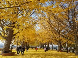 낙엽 밟고 산책하는 여행객들, 늦가을 '만끽'